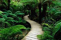 Deep Jungle Escape