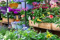 Wimmelbild Blumen